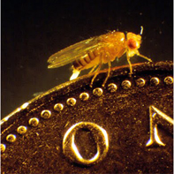 Fly on coin. Photo: Julian Dow